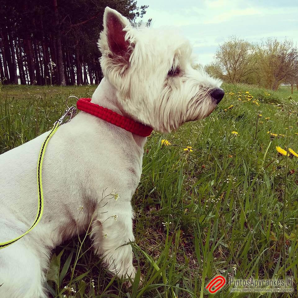 Šuns antkaklis iš paracord'o virvės